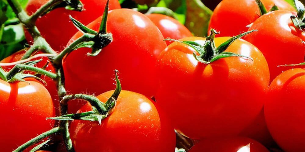 tomaten groenten kweken kweektips zaaien